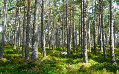 OBS Italia continua la sua politica di attenzione all'ambiente